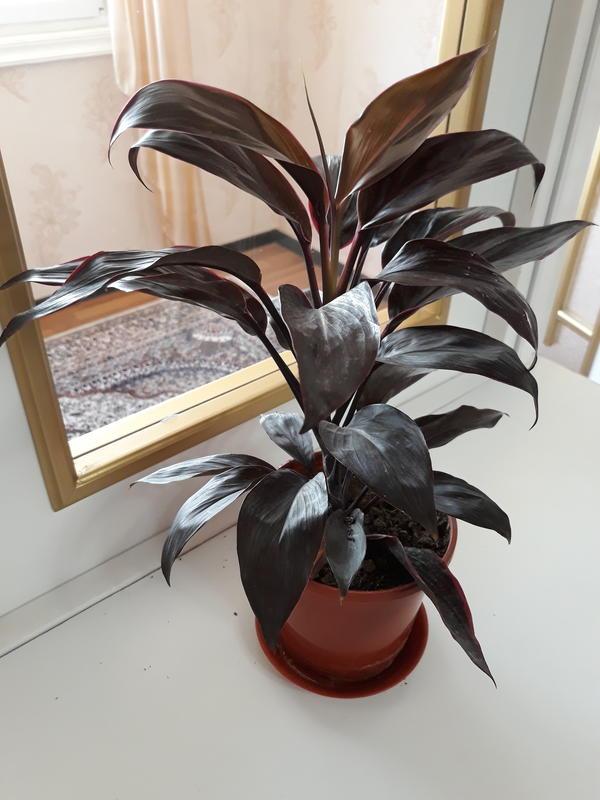 Как называется эта растения?
