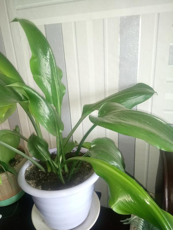 Помогите определить растение.
