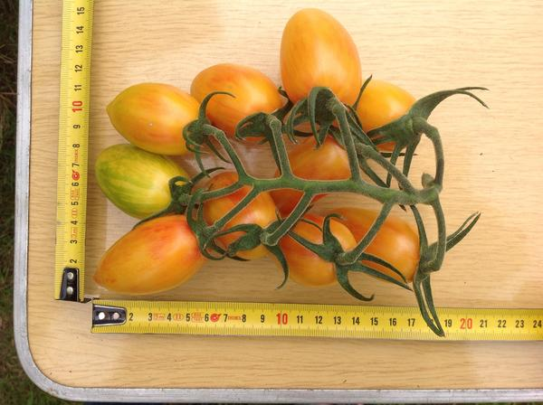 Плоды с рулеткой