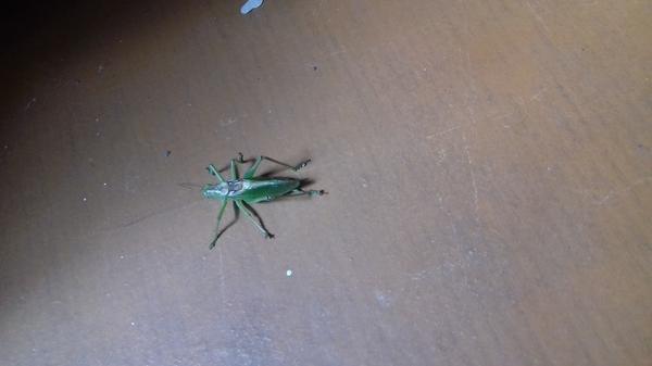подскажите что это за насекомое