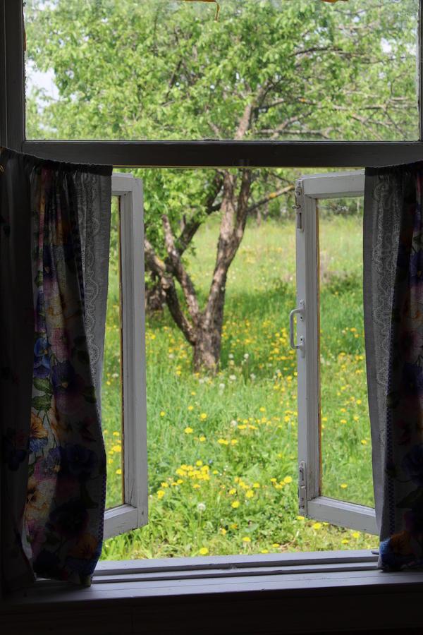 Вид из заднего окна