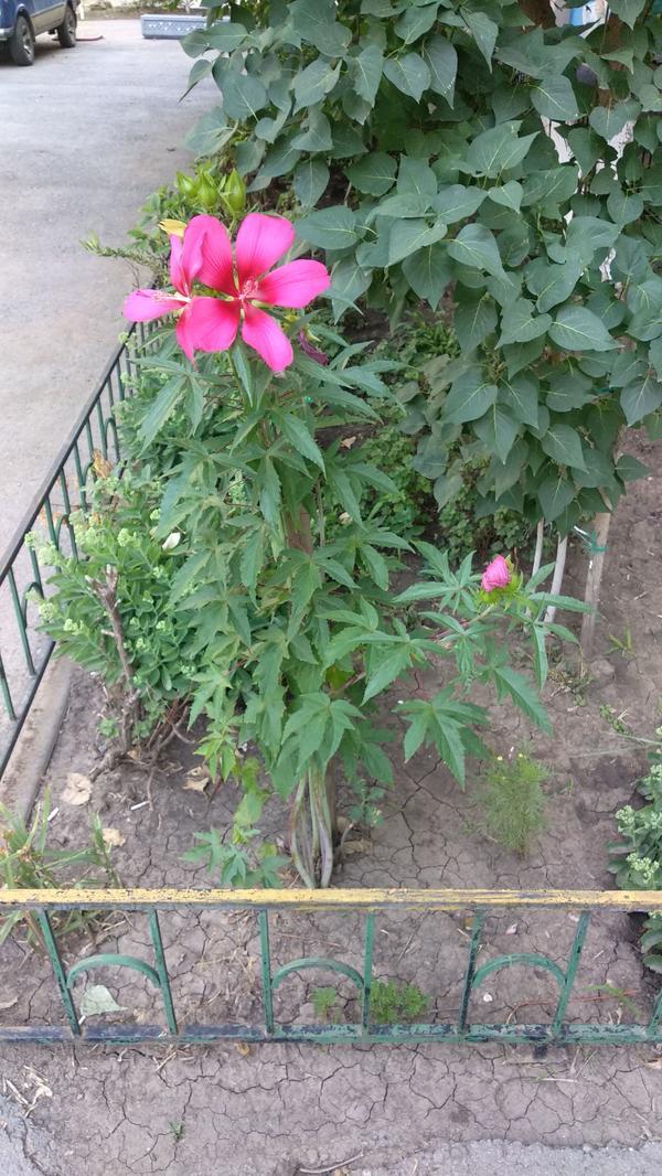 Цветок во дворе