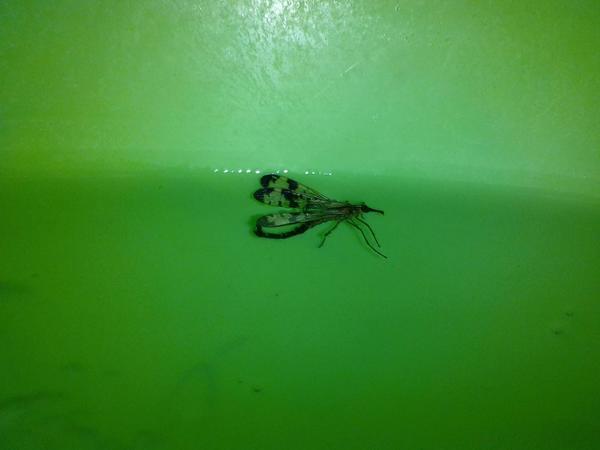 Самоубился в тазу с водой.