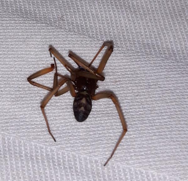 Что за паук