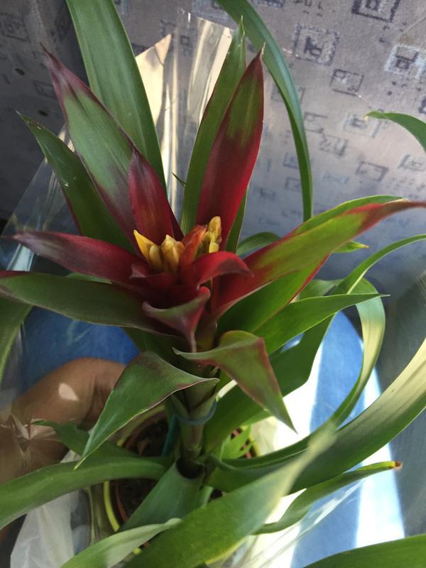 Как называется цветок и как за ним правильно ухаживать?