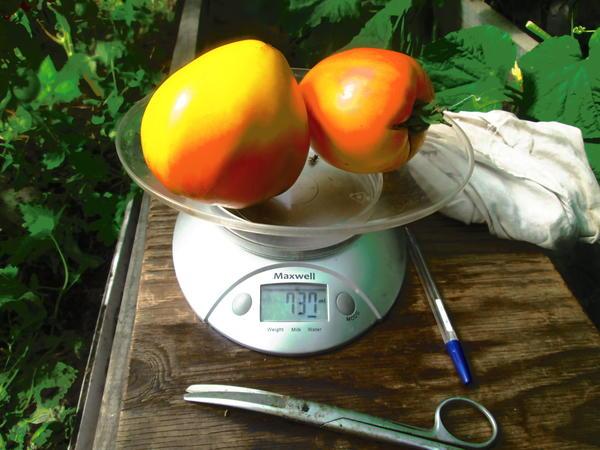 Вес двух томатов сокровище инков