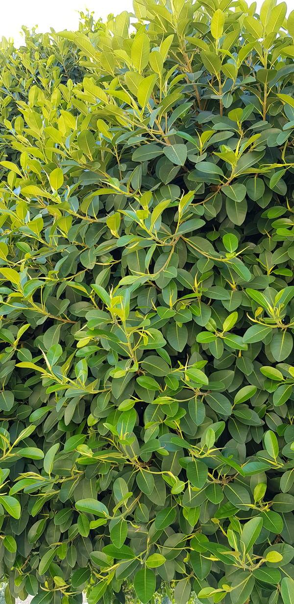 Листья ярко зелёные