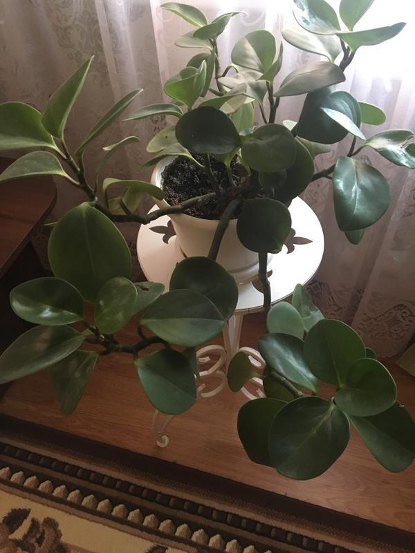 Подскажите, что это за растение?