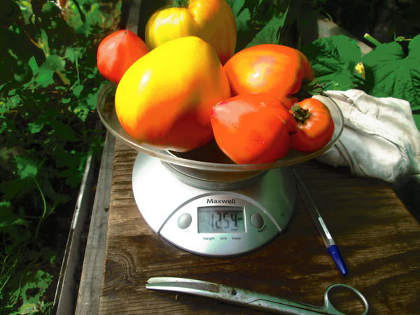 вес томатов первых кистей с двух кустов