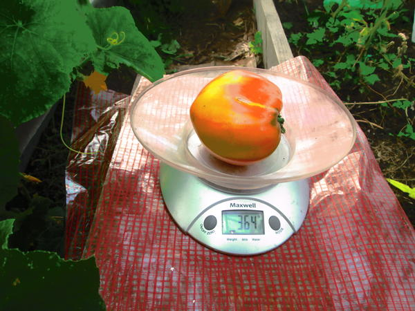 На фото вес одного красавца 364 гр.