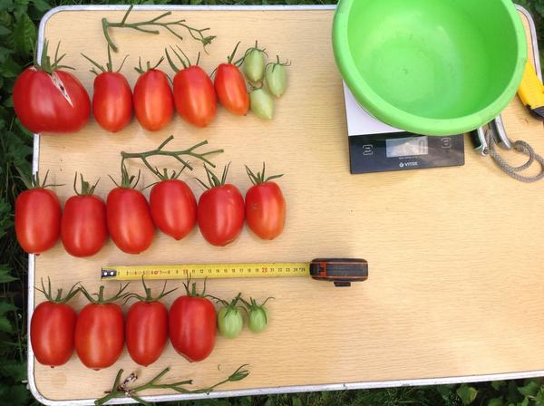 Просто томаты без кистей