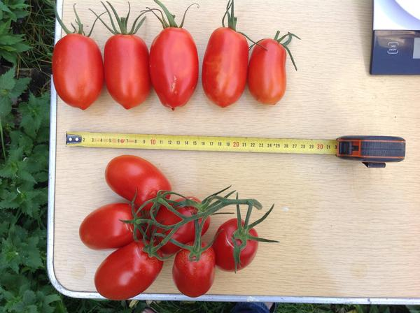 Снятые помидоры