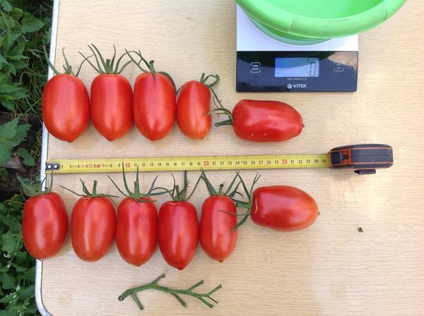 Те же томаты без кисти