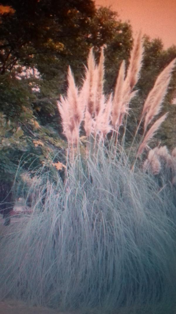 Подскажите, пожалуйста, как называется это растение