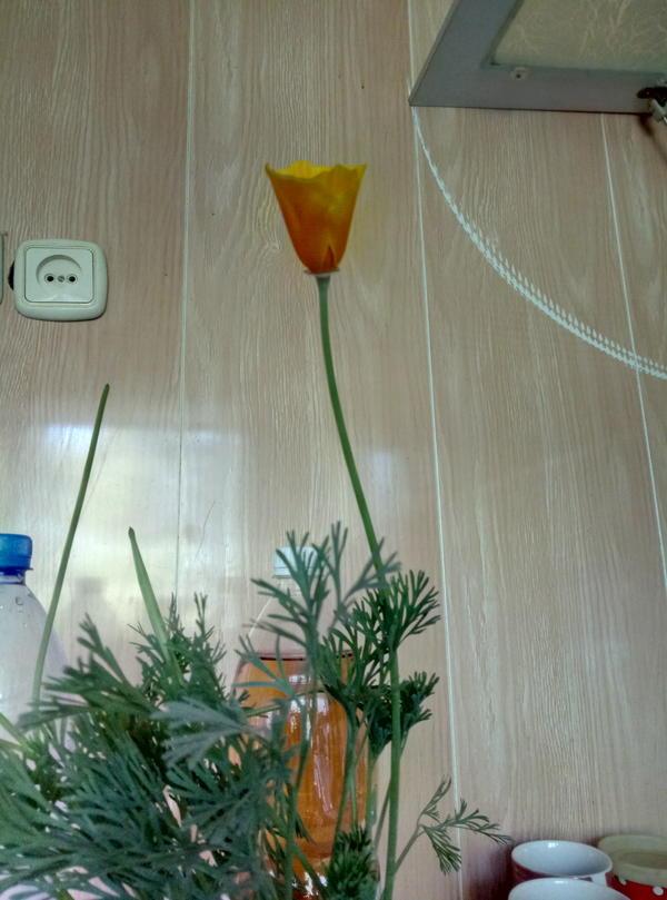 Подскажите название цветка пожалуйста.