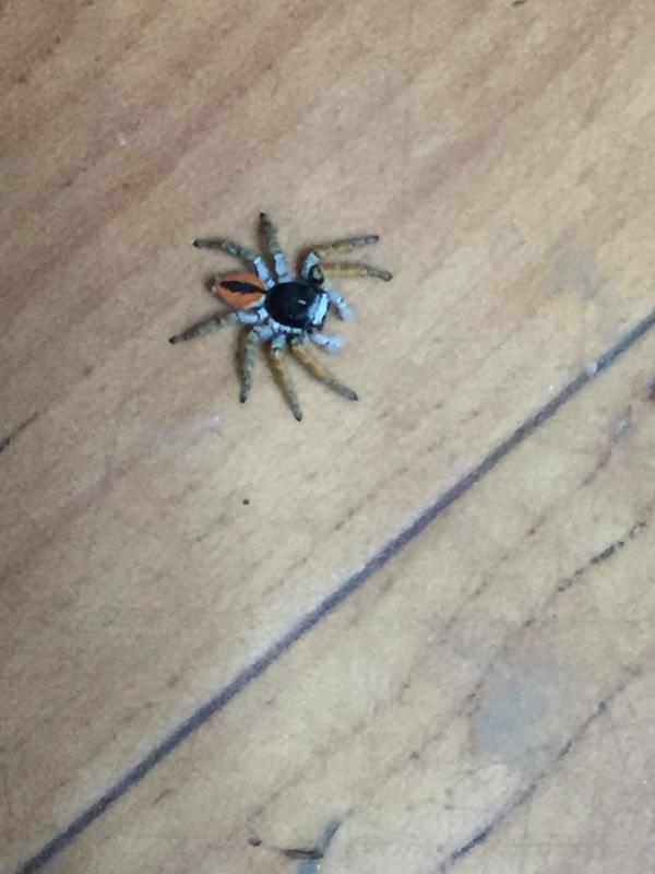 Подскажите пожалуйста,  что за паук?