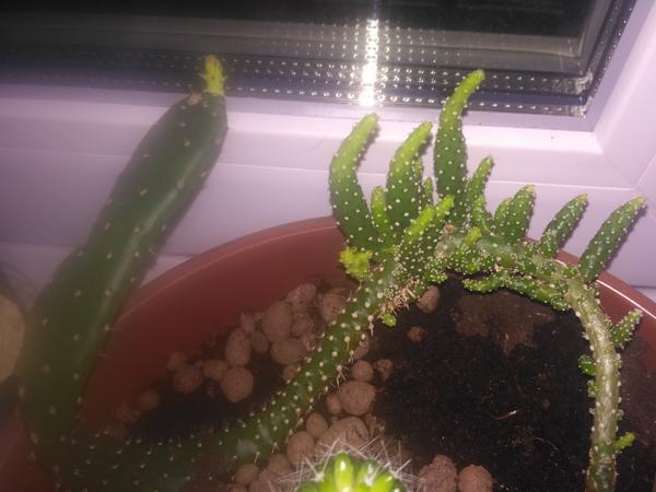Выросло вот такое из одного маленького ростка,как сейчас на нём.