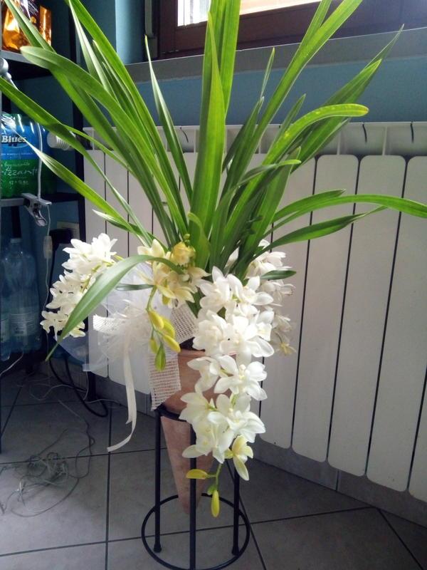 Подскажите пожалуйста название этого цветка и как за ним ухаживать?куплен в Италии