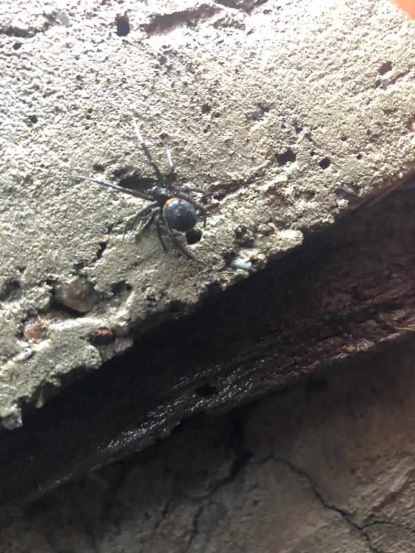 Фото паука