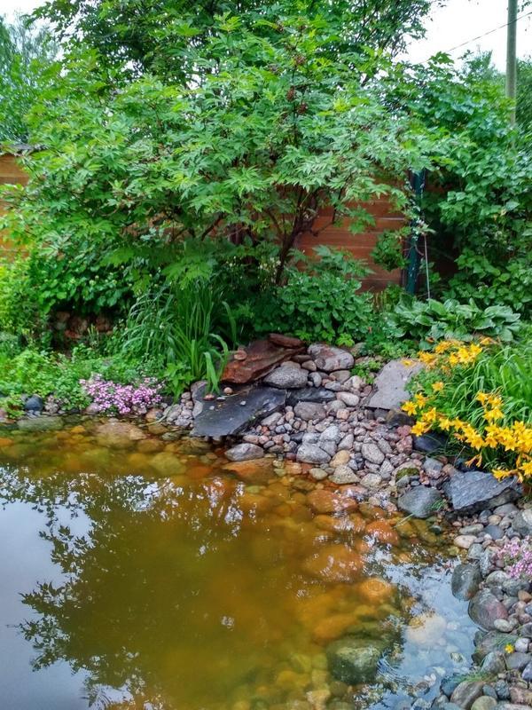 Наш пруд, июнь 2019