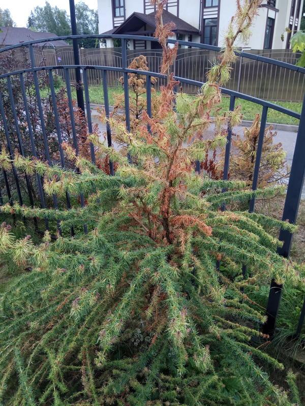 SOS! Помогите спасти деревья и кустарники на участке!