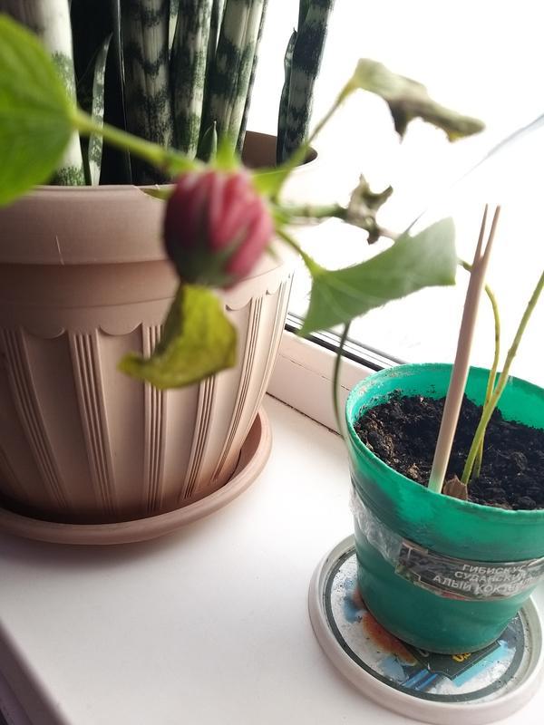 Наше растение