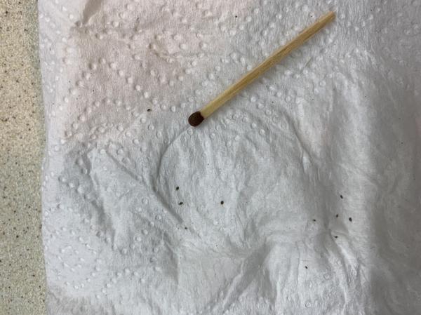 Очень мелкие насекомые