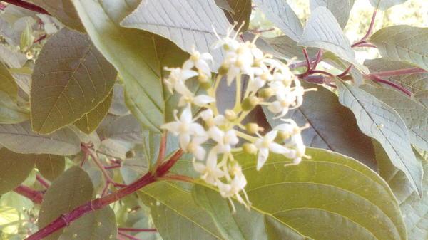 Здравствуйте растение подскажите название, в республике не видел но одно возле реки растет.