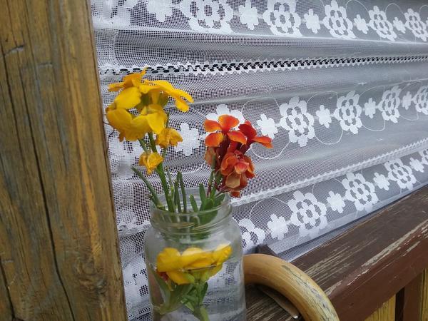 Что за цветы