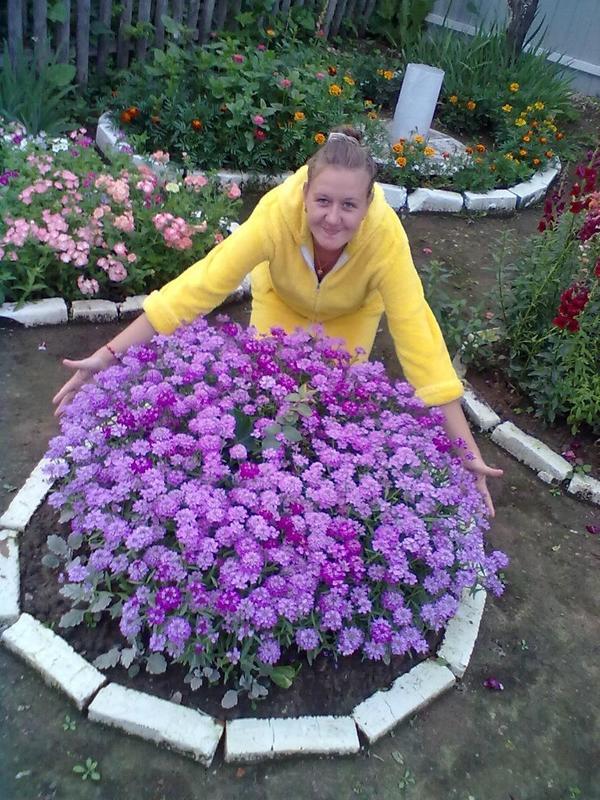 Фиолетовые цветочки, привезли из Риги
