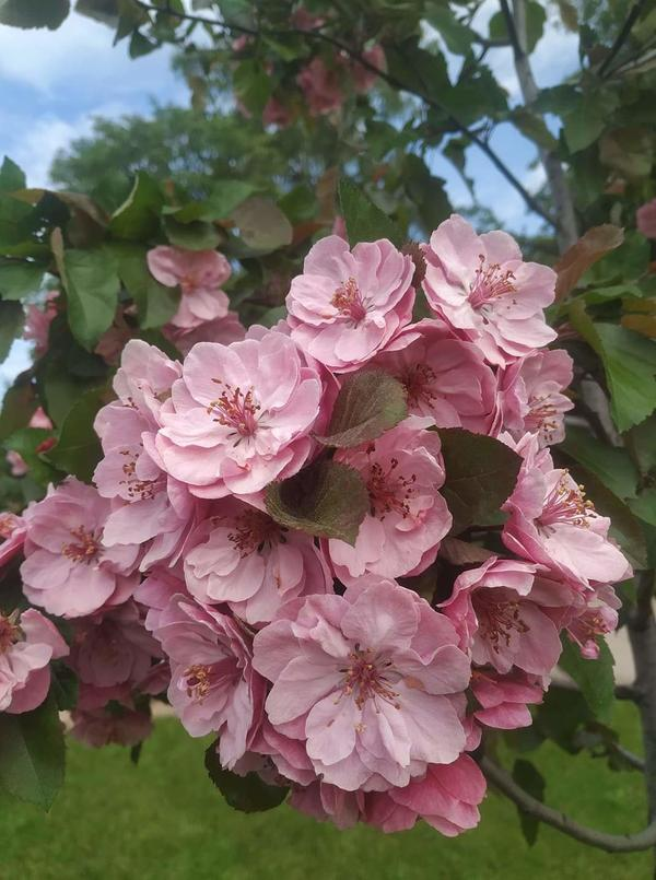 Деревце с цветами