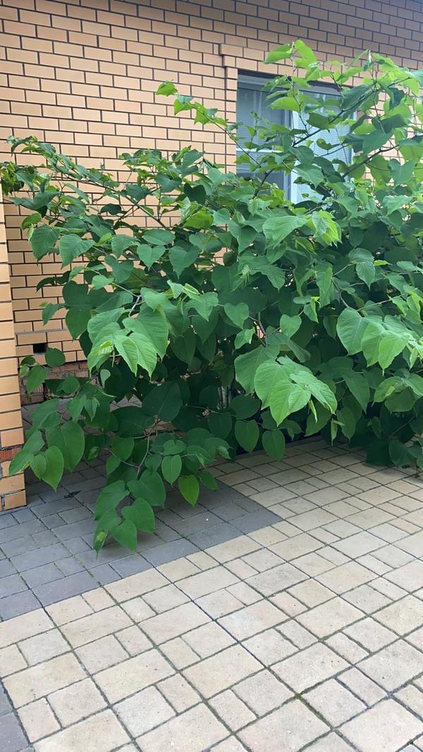 Здравствуйте. Помогите узнать название растения. Спасибо.