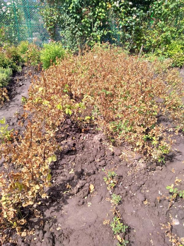 Растения после отравления
