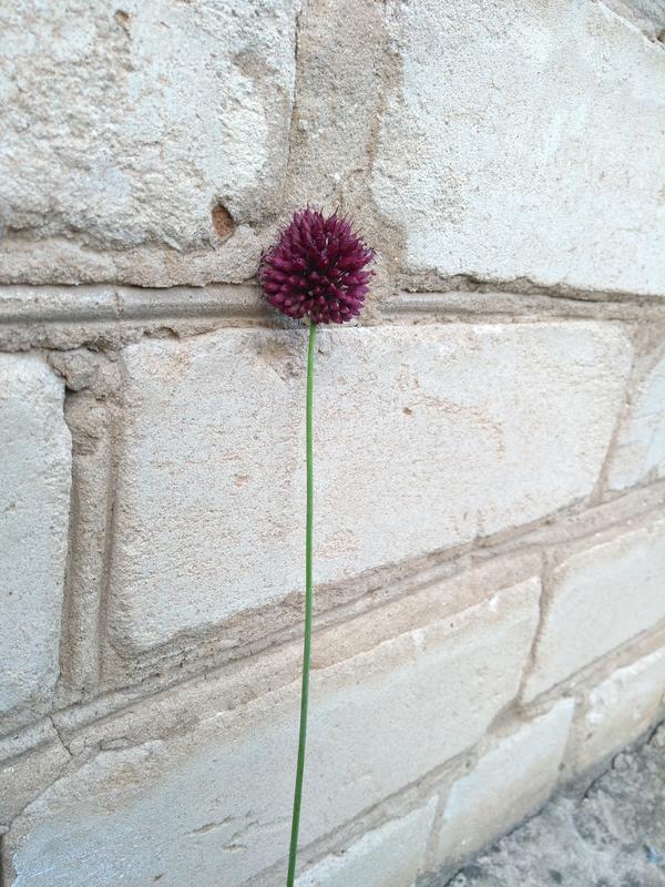Степное растение
