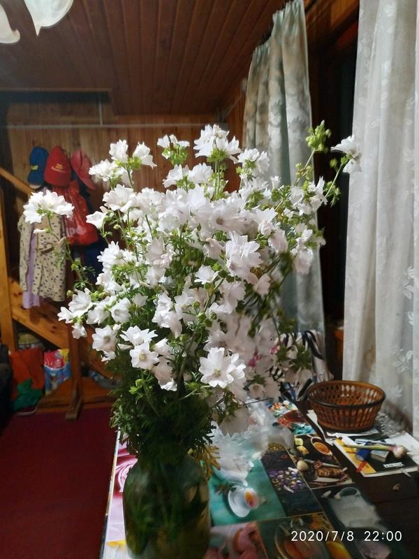 Неизвестный красивый цветок. Высокий, многолетний, цветет в июле белыми цветеми