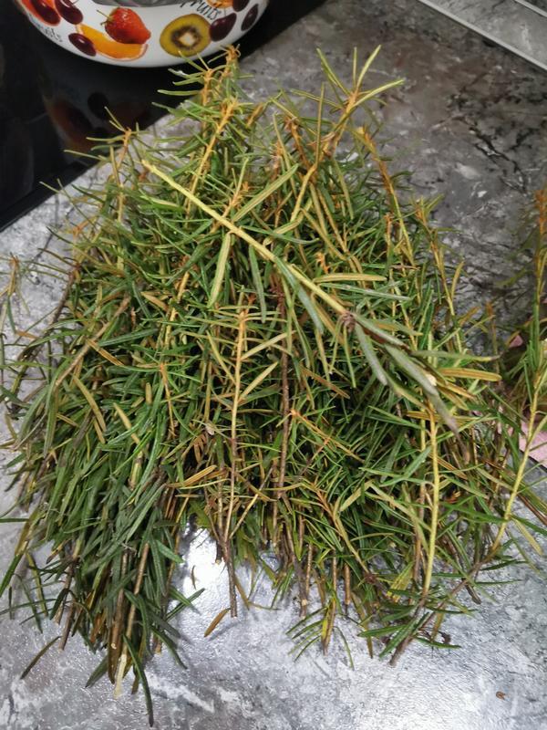 Неизвестное растение, похоже на розмарин