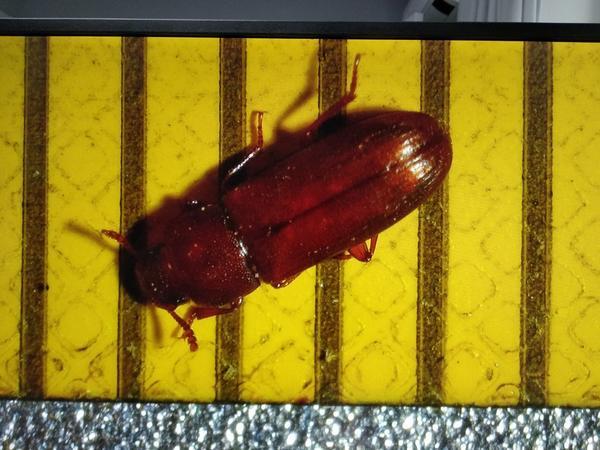 насекомое, разметка 1мм