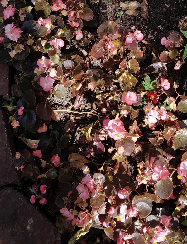 Цветы в клумбе - цветут в сентябре.
