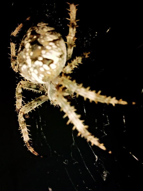 Опасен ли этот паук для людей и животных?