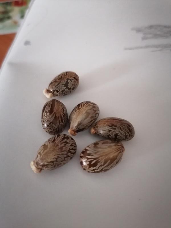 Семена чего-то. Не знаю чего. ХД