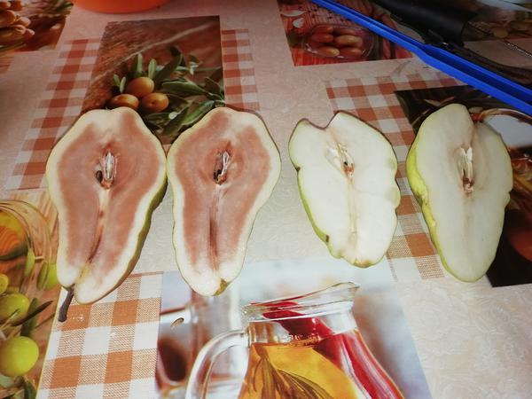 Плоды груши больные и здоровые