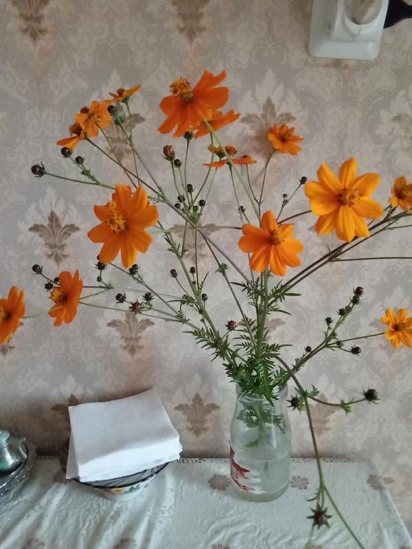 Может кто знает название цветка, семена привезла из Абхазии. Вырастила через рассаду.