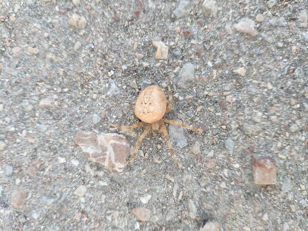 Неизвестный паук