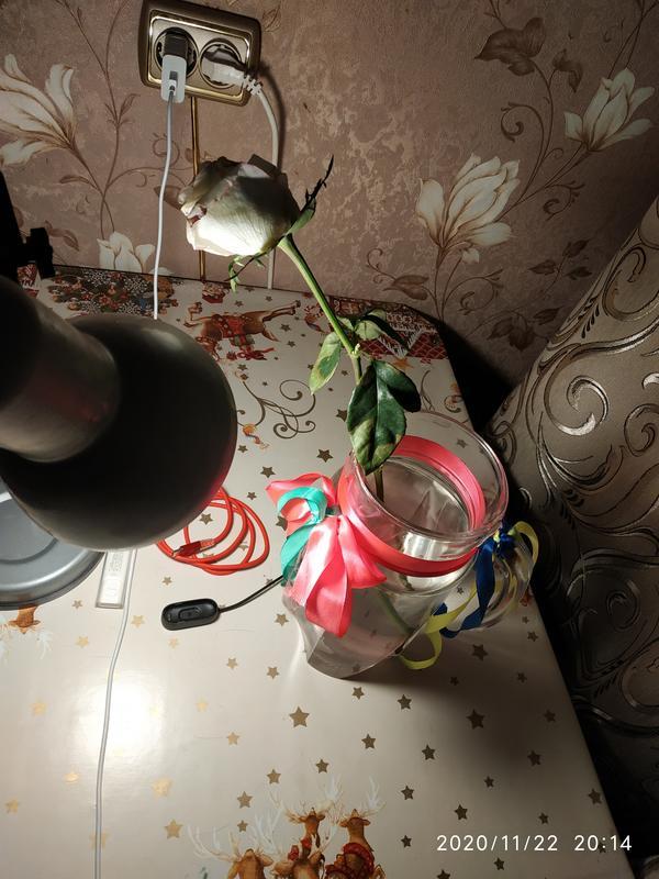 Укорененная роза из букета вдруг стала увядать. Что делать?