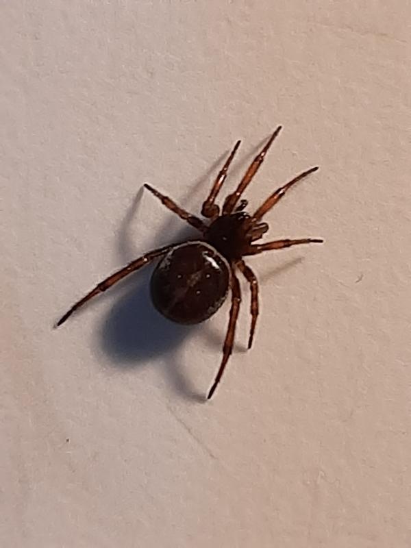 Что это за паук,и опасен ли он.