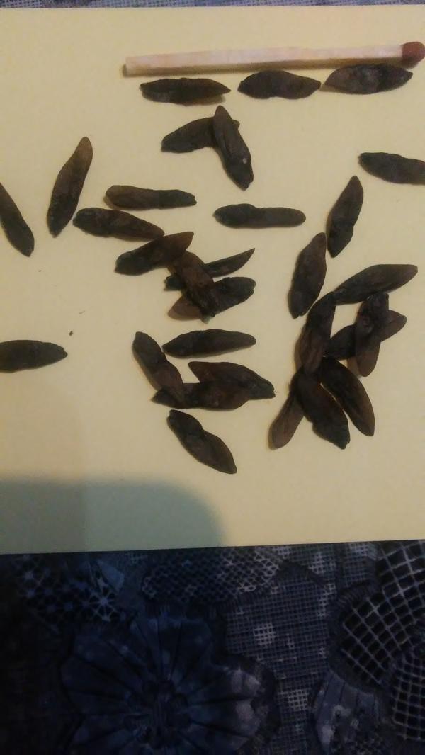 Семена неизвестного цветочного растения