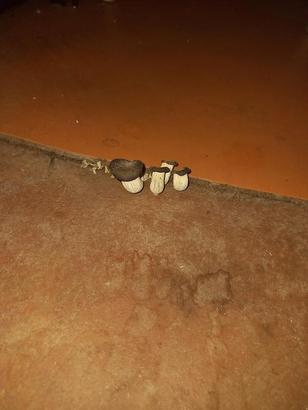 Грибы в полу веранды