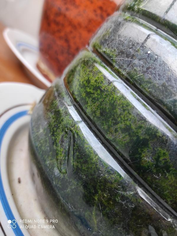 Почему начали скручиваться листья у огурца, нижние желтеют и отваливаются? Как вылечить растение?