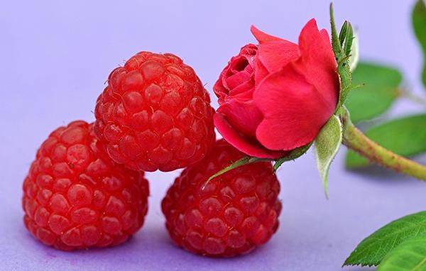 Малина соблазнительная Rubus illecebrosus и малина розолистная (Rubus rosifolius). В чём отличия?