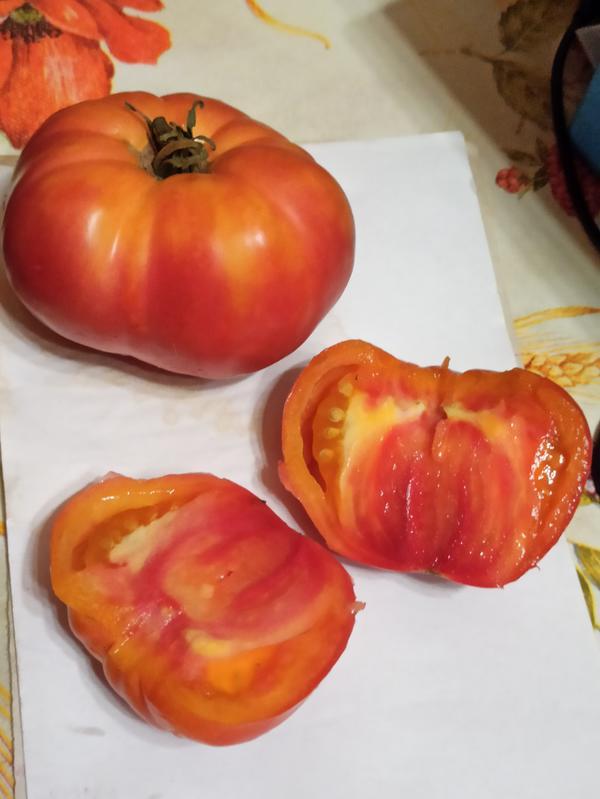 Томат плоско-округлый, ребристый, сперва желто-оранжевый, потом от кончика к плодоножке распространяются малиновые полосы и краснеет весь, часто остаются небольшие оранжевые плечики. Мякоть на разрезе также полосами и пятнами от конца к плодоножке. Салатного типа или биф, камеры небольшие, без жидкости, семян мало. Помогите определить сорт?